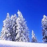 Schnee Gefallen