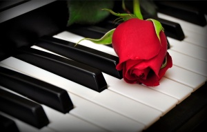 a-rose-on-the-piano-keys