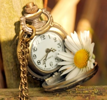 6944749-clock-time-daisy-flower