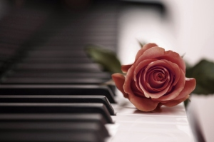 Beautiful-Rose-On-Piano-Keyboard-wide-i