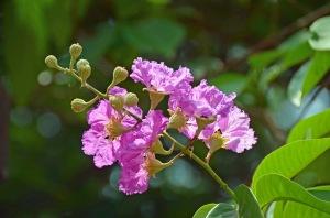 Kerala-Pink-Flower-2